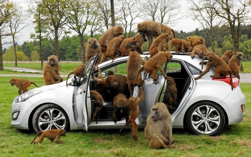 Сколько было владельцев у транспортного средства